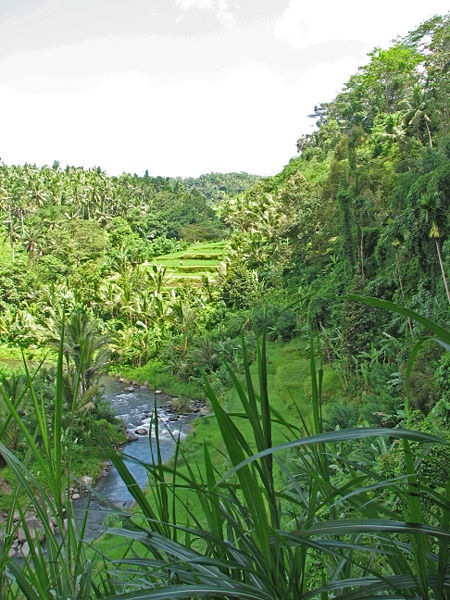 Ubud_river_valley